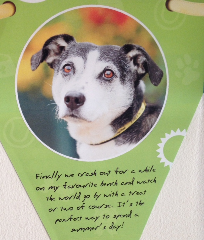 Our Dogs Trust dog Shane